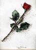 Thumbnail Rosy